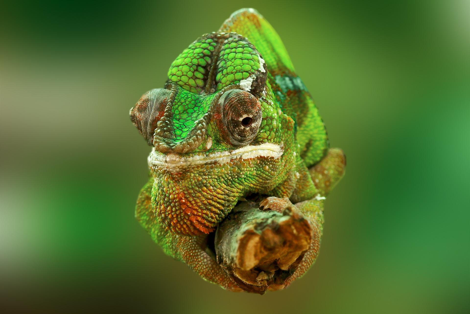 Ako sa brániť proti manipulátorovi, ktorý svoje názory prispôsobuje ako chameleón